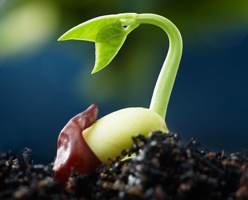 Plucking Up the Seedlings of Regret